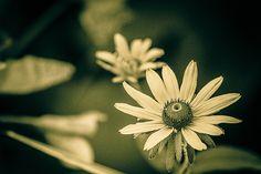 Changing seasons by vamsizzz, via Flickr