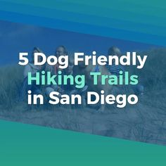 5 Dog Friendly Hiking Trails in San Diego. San Diego is home to countless hiking trails, however sadly, a big number of them do not allow you to bring your dog. We did some study as well as discovered some of the best places where you as well as your dog can adventure with each other! Proceed along to learn where you and also your fuzzy pal can hike. #sandiego #hiking #trails #hikingtrails #doghiking #dogtrail #fiestaisland #ironmountain #california Hiking Dogs, Hiking Gear, Hiking Trails, California Style, California Travel, Pet Travel Carrier, Travel Items, Travel Essentials, Dog Friends