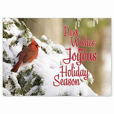 Cardinal on Snowy Branch Holiday Card   Animal Christmas Cards   Deluxe
