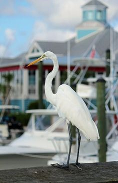http://fineartamerica.com/featured/waiting-for-the-boat-cynthia-guinn.html