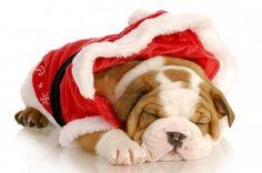 sleeping santa :)