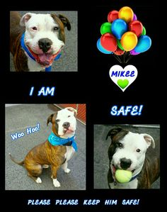 MIKEE  is ADOPTED