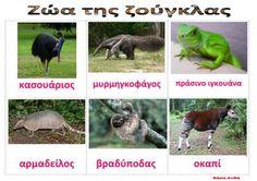 dreamskindergarten Το νηπιαγωγείο που ονειρεύομαι !: Ζώα της σαβάνας και της ζούγκλας - Λίστες αναφοράς για το νηπιαγωγείο Animal Crafts, Blog, Animals, Education, School, Greek, Animales, Animaux, Schools