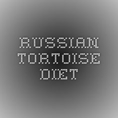 I have seen numerous suggestions for Russian tortoise diet Some great Some awful. Russian Tortoises are nibblers and appreciate broad leaf plants. Horsefield Tortoise, Red Footed Tortoise, Tortoise Habitat, Sulcata Tortoise, Tortoise Care, Turtle Care, Pet Turtle, Russian Tortoise, Tortoises
