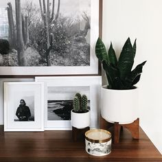 West Elm Turned Leg Planters (large)