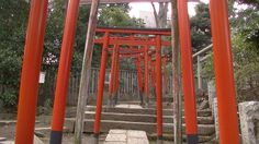 #japan#japon#travel#torii#temple