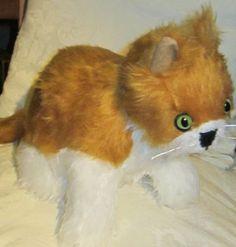 Copper Fluffy Cat. Fluffy Copper Cat Copper and White Cat