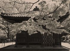 Nara Temple - One of the templed that you can see in Nara