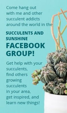 Find out the best planting tips for succulent container gardens! You'll discover common mistakes to avoid when planting succulents in containers! Propagating Cactus, Propagate Succulents From Leaves, Succulents For Sale, How To Water Succulents, Types Of Succulents, Colorful Succulents, Growing Succulents, Succulents In Containers, Rare Succulents