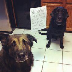 Quién tiene uno o màs perros, siempre se ha encontrado con ésto