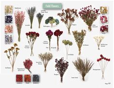 Image detail for -Dried Flowers Wholesale Dried Flowers Wholesale, Dried Flower Arrangements, Growing Seeds, How To Preserve Flowers, Drying Herbs, Cut Flowers, Amazing Flowers, Flower Power, Floral Design