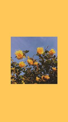 Yellow Aesthetic Wallpaper Iphone 62 Ideas For 2019 Wallpaper Pastel, Tier Wallpaper, Iphone Wallpaper Vsco, Sunflower Wallpaper, Aesthetic Pastel Wallpaper, Cute Wallpaper Backgrounds, Animal Wallpaper, Black Wallpaper, Mobile Wallpaper