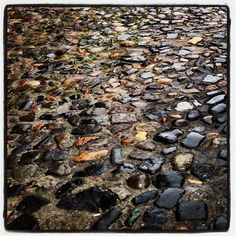 Cobblestone Savannah streets…
