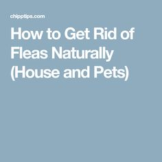 How to Get Rid of Fleas Naturally (House and Pets)