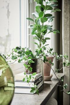 The window sill, a solution that I miss from home - perfect place for pots, plants or nice trinkets you like . House Window Design, Decoration Plante, Pot Plante, Plants Are Friends, Ideas Hogar, Interior Plants, Interior Design, Green Life, Green Plants