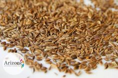 Dill seeds are LIKELY SAFE when consumed as a food, but in over dose it can be unsafe for you.  #DillSeed #SideEffectsOfDillSeed #BadEffectsOfDillSeed #DownfallsOfDillSeed #BenefitsOfDillSeed #GoodEffectsOfDillSeed #Seeds #Spices #Herbs #Pulse #Ingredients #Powders #Foods #FoodsAndSpices #Etc  http://www.arizone.in