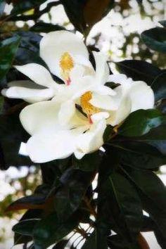 Cuadro Fragrant Flower II