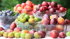 Plant fruit trees now for a bounty in the summer and autumn.