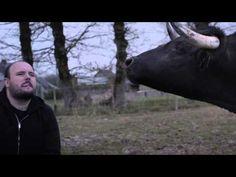 Pide perdón a este toro por la tauromaquia… a través de su canto. Escúchalo. - Popful en Español