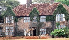 griffi manor africa   ... www.africatravelresource.com/africa/kenya/nairobi/karen/giraffe-manor