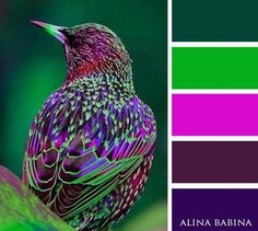My favorite Green and Purple Color Schemes In Wow Home Design Trend with Green and Purple Color Schemes Purple Color Schemes, Colour Pallette, Color Palate, Color Combos, Bright Color Palettes, Best Color Combinations, Color Palette Green, Complimentary Color Scheme, Green Colors