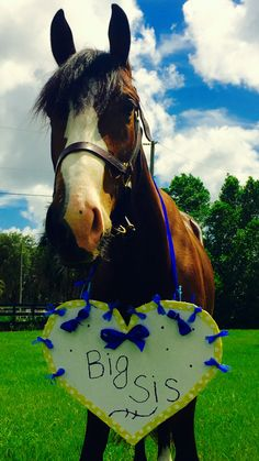 Cute way to involve your horse with a baby announcement!