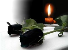 Condolence Messages, Text On Photo, Candle Holders, Lily, Candles, Pictures, Grief, Icons, Humor