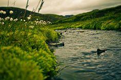 Iceland, Klara Harden