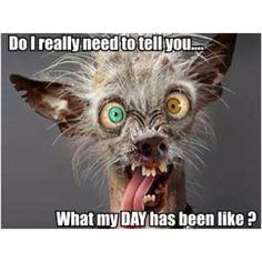 Hilarious, Funny & Sexy has members. Welkom by Afrikaner humor en witt, hilarious and funny pics (ADULTS Lees asseblief die reels van. Ugly Animals, Cute Animals, Memes Humor, Vape Memes, Humour Quotes, Funny Work, Scary Funny, Chistes, Funny Animal Pictures