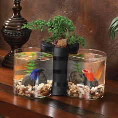 Elive Betta Cylinder & Planter - Black http://www.thatpetplace.com/elive-betta-cylinder-planter-black?utm_content=buffera57e9&utm_medium=social&utm_source=pinterest.com&utm_campaign=buffer | The Elive Betta Cylinder and Planter is a great way to showcase your favorite betta fish with a live plant. The kit combines two crystal clear 0.5 gallon glass cylinders with a planter base. The top compartment can be used to hold your favorite live plant or it can also be used as a desktop organizer to…