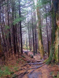 #4 - Favorite Place to Take a Walk - Appalachian Trail #readypac and #fit&fresh