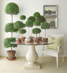 Tone on Tone: All About Myrtle Topiaries