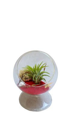 Red Circle Terrarium