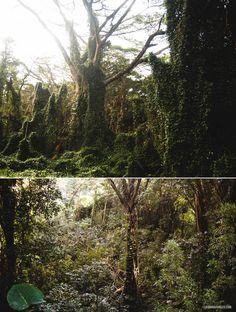 Hiking to Manoa Falls #hawaii #oahu #hike #manoa #falls #honolulu