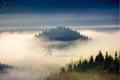 'coniferous forest on a hillside in foggy mountains at sunrise' by pellinni Framed Prints, Canvas Prints, Art Prints, Foggy Mountains, Mountain S, Romania, Travel Mug, My Photos, Sunrise