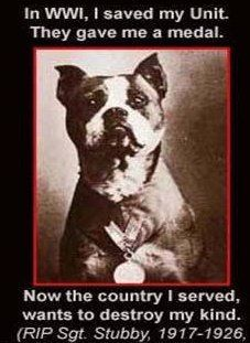 pit bull awareness month - Most decorated dog during both World Wars.