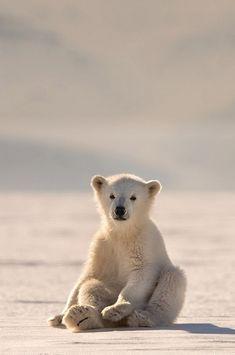 "myosotis92: "" earth-earthlings: "" (௯) Polar Bear Baby   by Roie Galitz Look at this small polar child sitting in this polar spring, in this polar home. "" """
