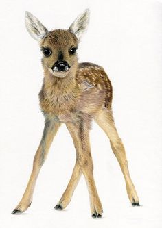 FAWN Baby Roe Deer Nursery Ltd Edit art drawing prints 2 sizes A4/A3 /Note Card | eBay