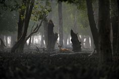 reinopin: Xavier Desmier (lauréat 2011), Les Sundarbans, la plus grande mangrove du monde. Golfe du Bengale, La mangrove des Sundarbans. Bangladesh © Xavier Desmier © Xavier Desmier