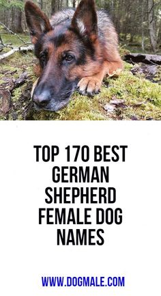 Top 170 Best German Shepherd Female Dog Names German Shepherd Names Female, Australian Shepherd Names, Cool Dog Names Boys, Boy Dog Names, Top Female Dog Names, Dog List, Chihuahua Dogs, Happy Dogs, Best Dogs