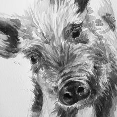 More farm animals are coming soon. I've been working on some watercolour sketches! This little piggy was SO curious!