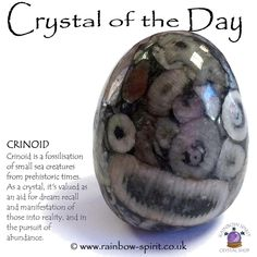 Crystal Of The Day - Crinoid