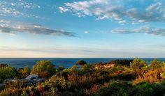 Life in the Mediterranean landscape.