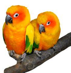 Papagal, Pasăre, Tropicale, Ara