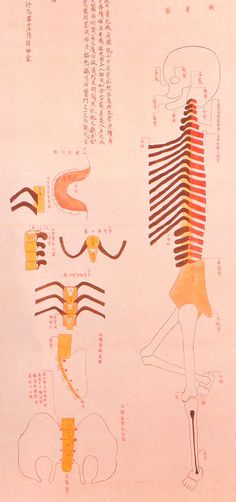 Human skeleton, 1732    These illustrations -- created in 1732 for an article published in 1741 by an ophthalmologist in Kyōto named Toshuku Negoro -- show the skeletal remains of two criminals that had been burned at the stake.