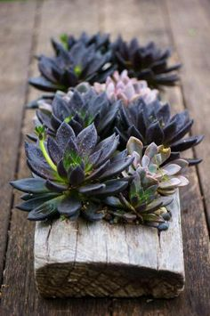 succulents in wood, great display for an outdoor dining area rustic.  Repinned by www.claudiadeyongdesigns.com  www.thegardenspot.co.uk