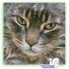 Bengal pdf pattern $5 cat a1717 on International Cross Stitch