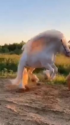 Funny Horse Videos, Funny Horses, Cute Horses, Cute Animal Videos, Funny Animal Pictures, Most Beautiful Horses, Animals Beautiful, Beautiful Creatures, Cute Little Animals