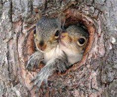 Squirrels - cozy in a tree - Picture Color:  Peach, Cream, Brown, Gray
