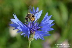Insects & Other – Gyűjtemények – Google+